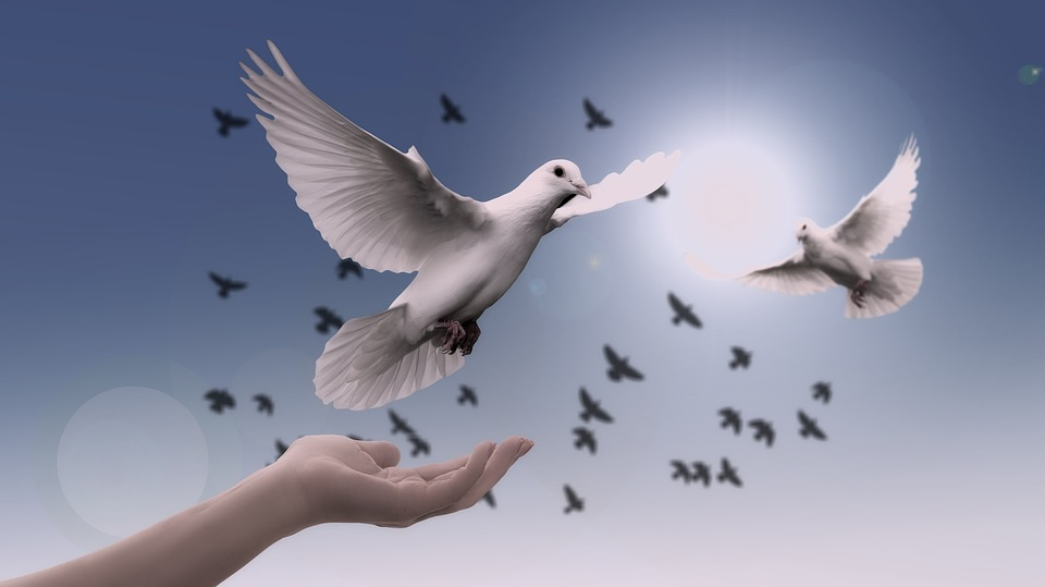 Doves, the peace makers